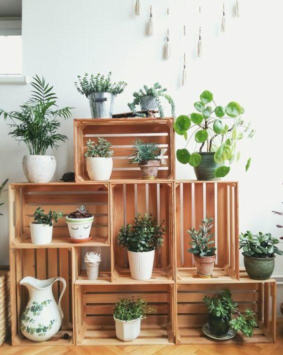 décoration avec plante
