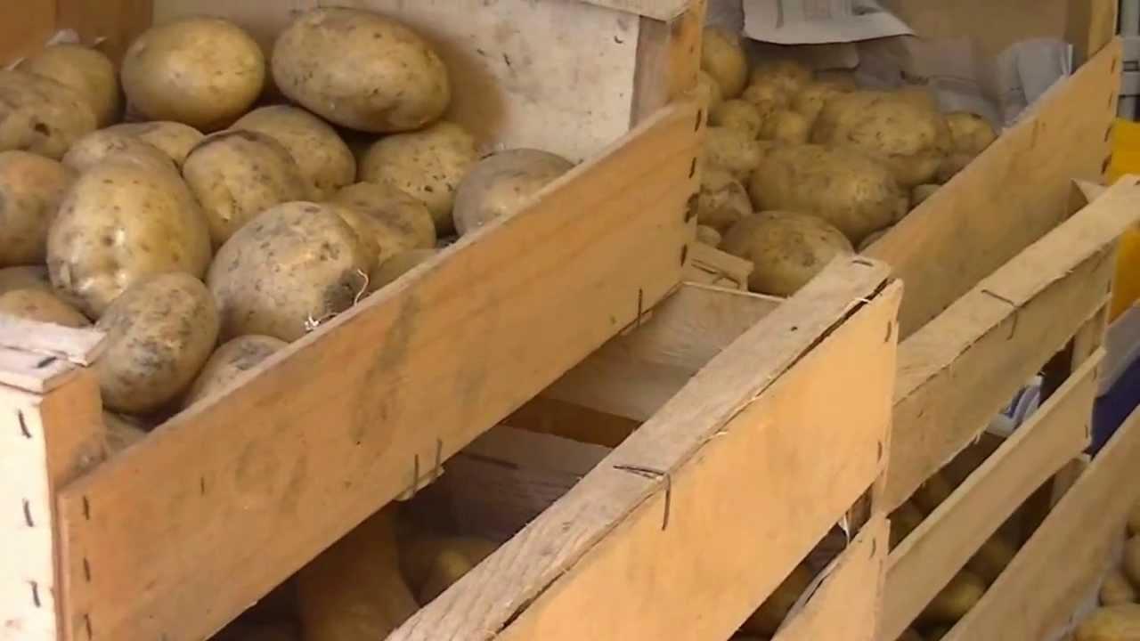 Comment conserver des pommes de terre