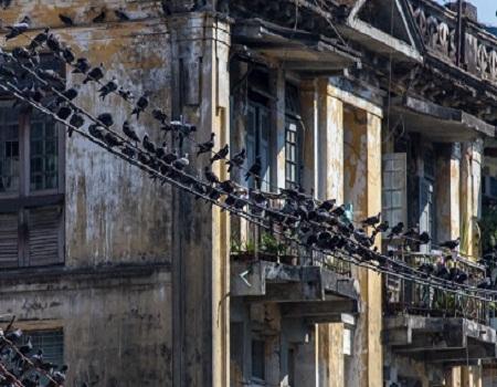 Utiliser un fil tendu ou des barres déstabilisantes pour faire fuir les pigeons rapidement