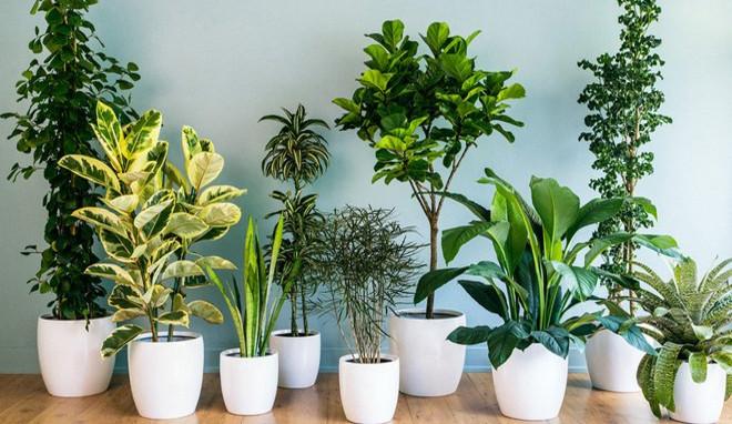 Les 5 Plantes Magiques Pour Purifier L Air De Votre Chambre