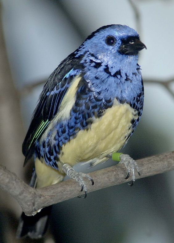 beaux oiseaux