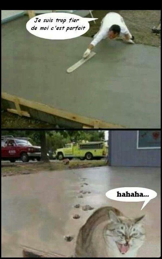 images drôles et amusantes