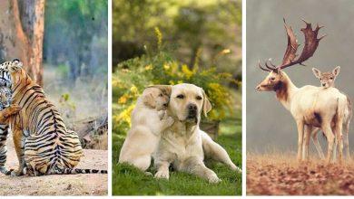 18 Magnifiques Photos D'animaux Avec Leurs Petits