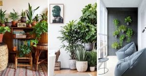 20 Idées déco pour mettre en valeur des plantes