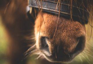 Cheval brun - Signification du rêve et symbolisme