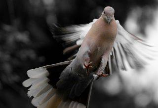 Qu'est-ce que cela signifie quand un oiseau fait caca sur vous?