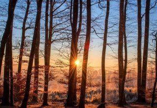 Rêves d'arbres - Signification et interprétation