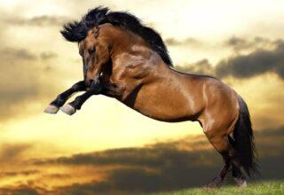 un-cheval