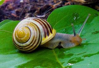 un-escargot