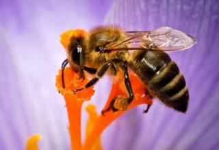une-abeille