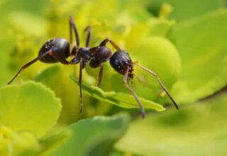 une-fourmi