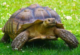 une-tortue