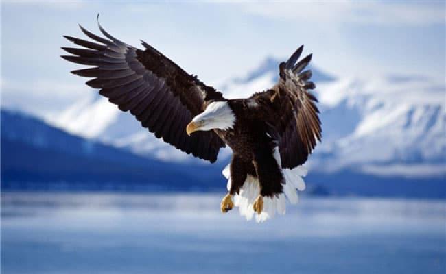 un-aigle
