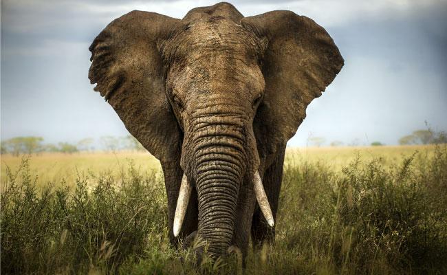 un-éléphant