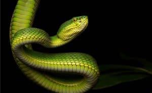 un-serpent