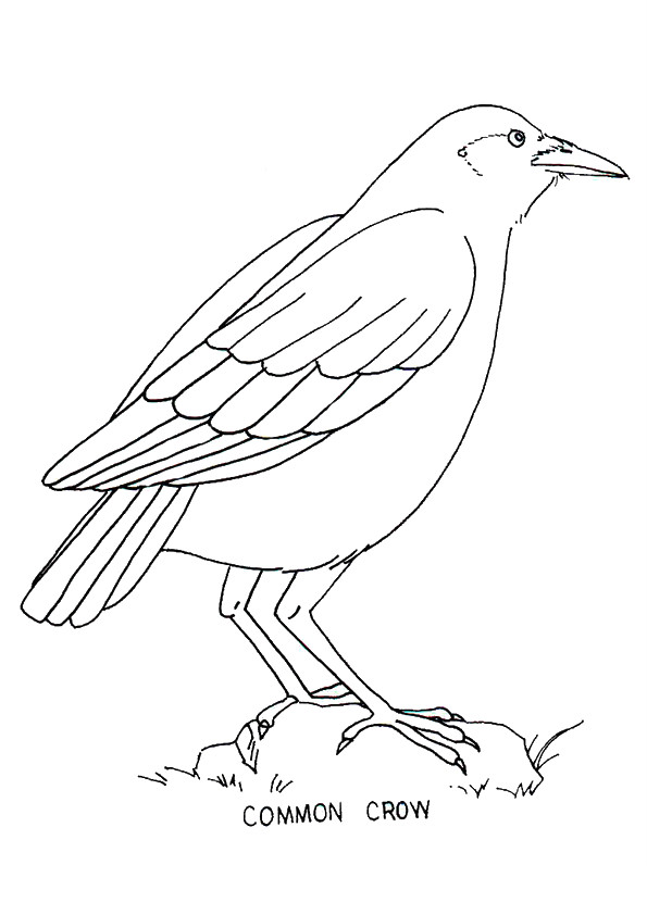 Common Crow Coloring Page