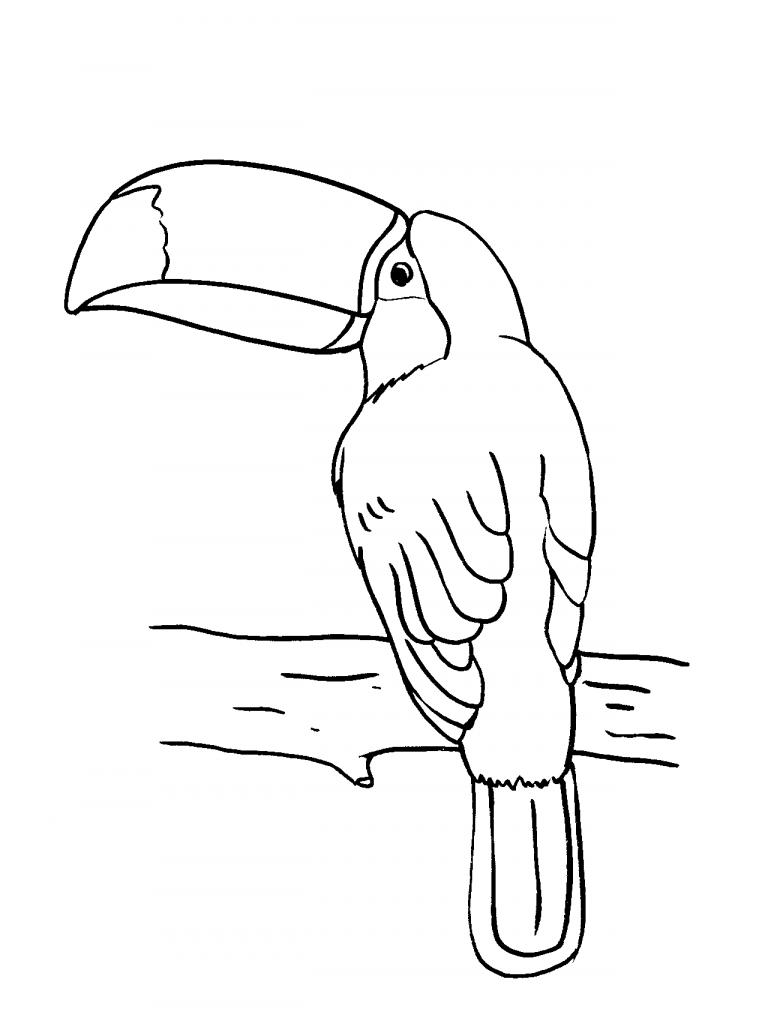 Coloriage Toucan gratuit à imprimer et colorier