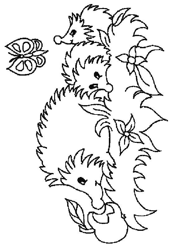Coloriage nid de hérisson