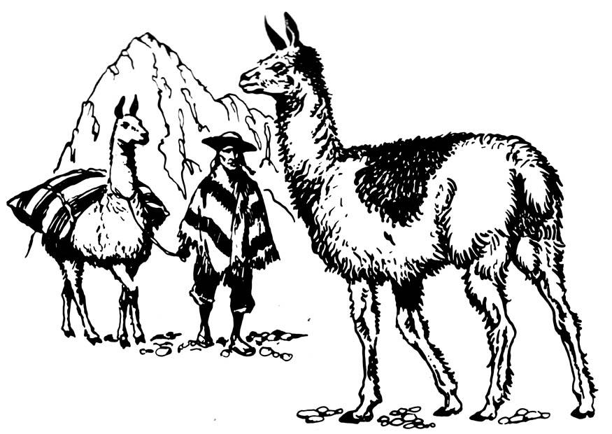 Coloriage de lamas réaliste
