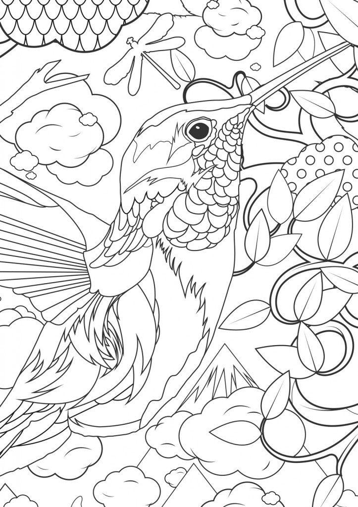 Coloriage adulte animaux - Humminbird
