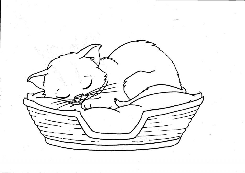 Coloriage chaton endormi gratuit