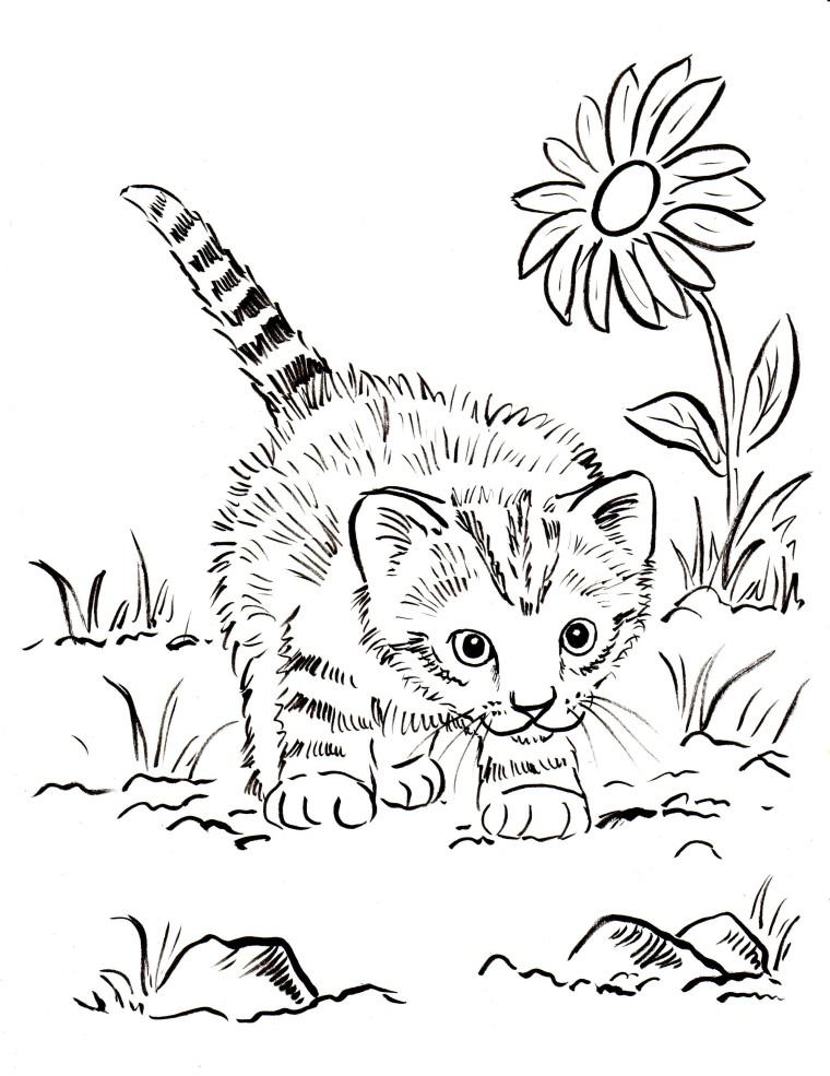 Coloriage chaton gratuit