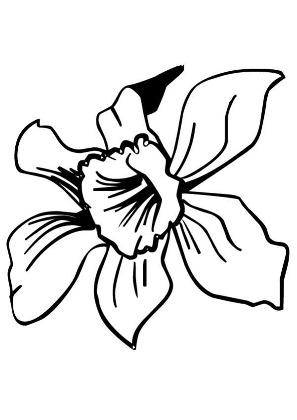 Coloriage fleur jonquille