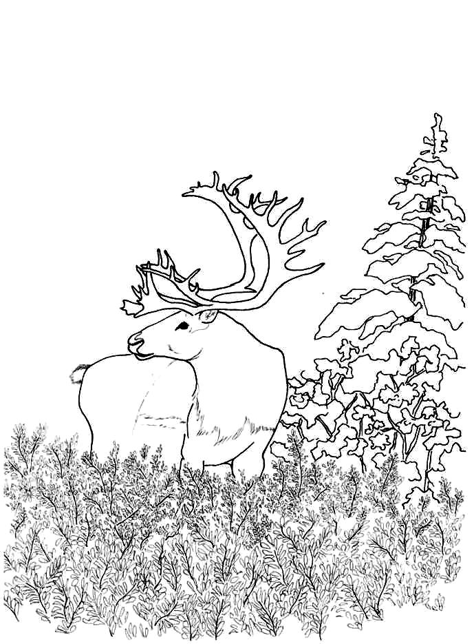 Coloriage cerf dans la forêt