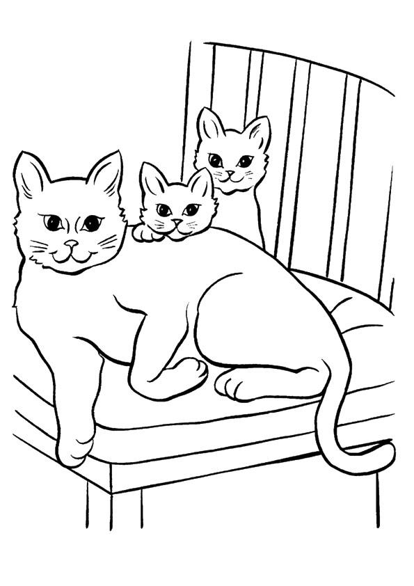 Coloriage de famille de chaton