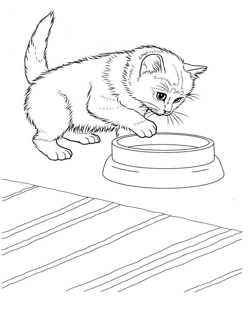 coloriage de chaton gratuit à imprimer pour les enfants