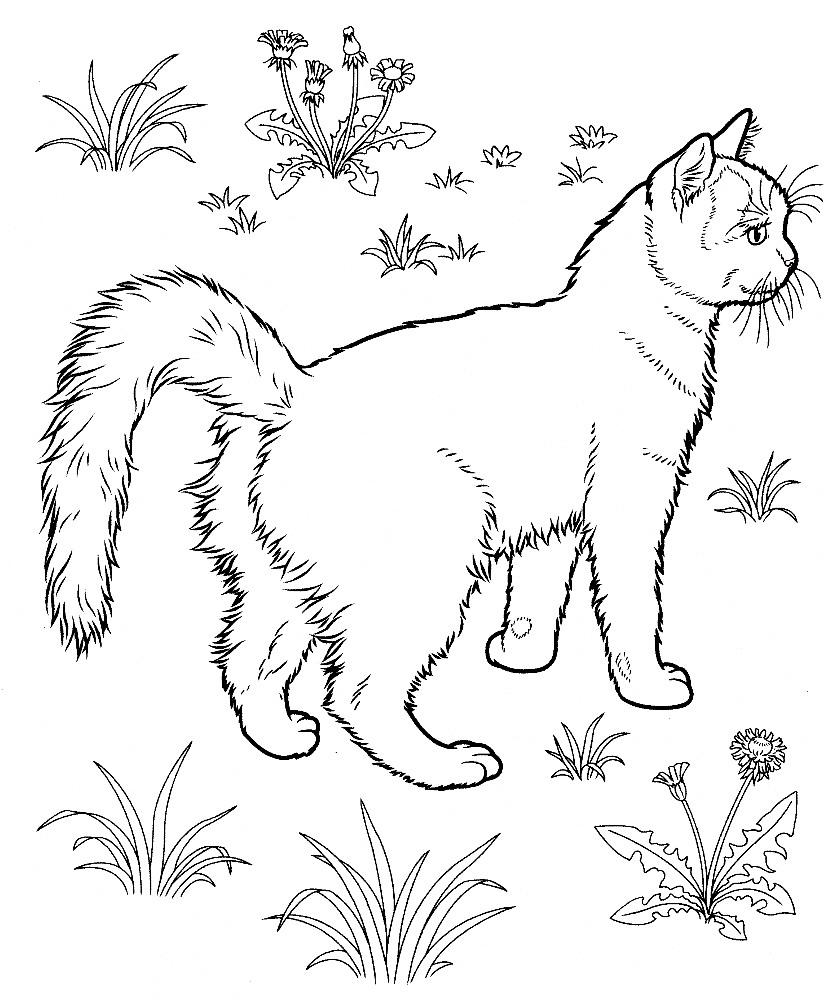 mignon chaton plus âgé à colorier