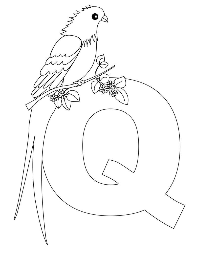 coloriage alphabet - Lettre Q