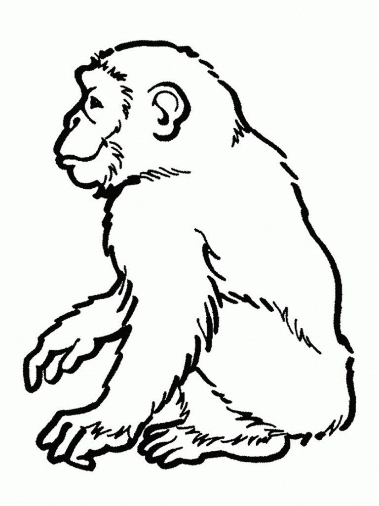 Coloriage chimpanzé