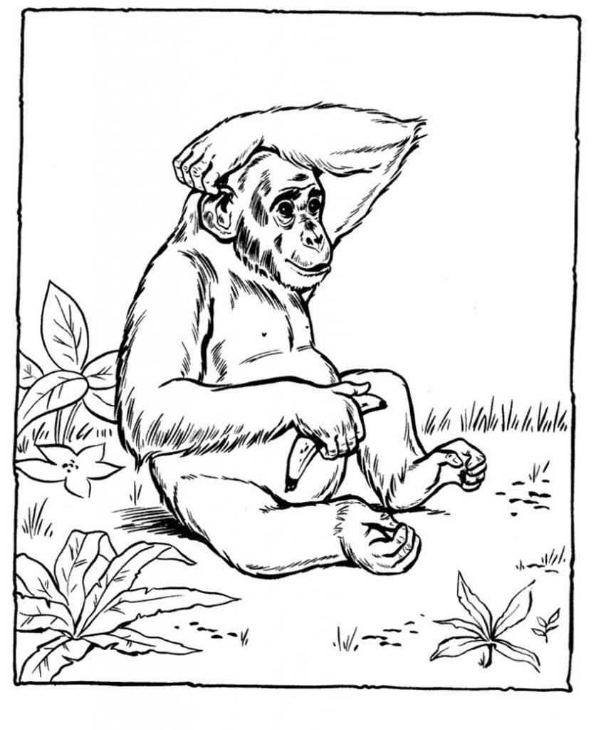 Coloriage chimpanzé pour les enfants