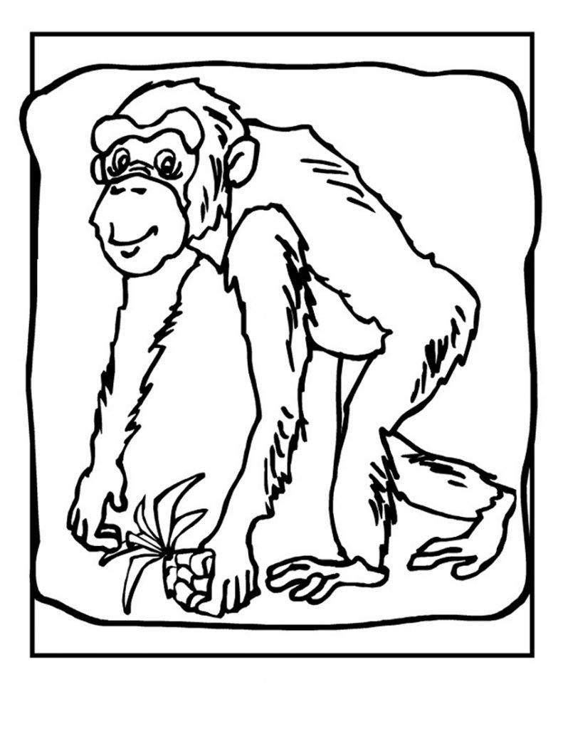 Coloriage chimpanzé à imprimer