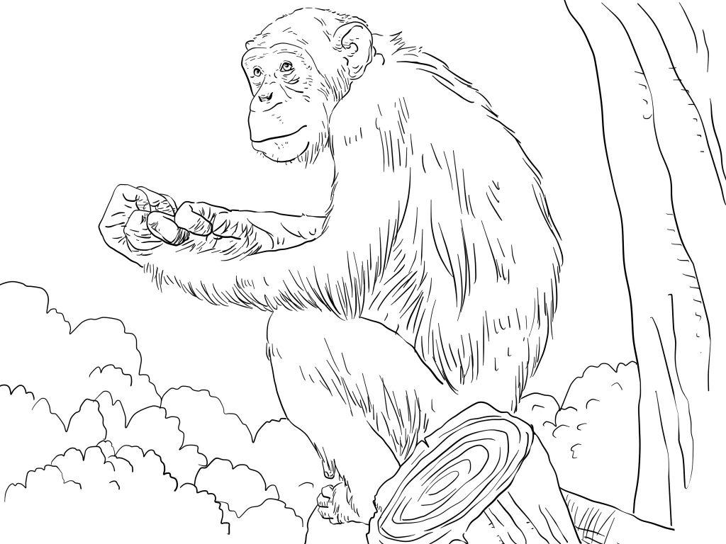 Coloriage de chimpanzé gratuit à imprimer