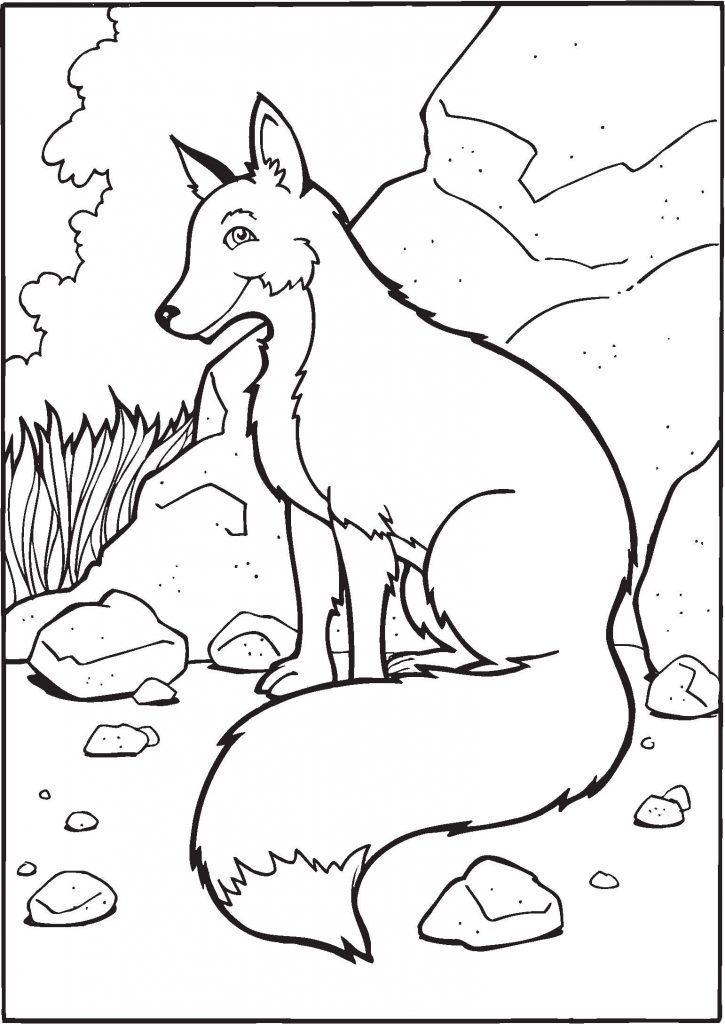 Coloriages de renard