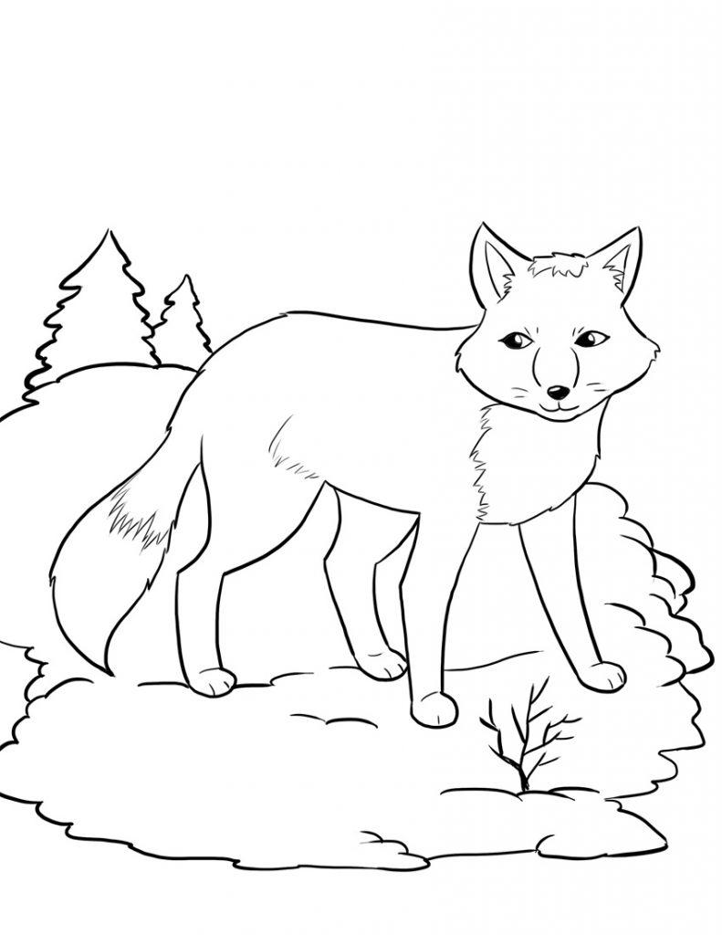Coloriage renard pour les enfants