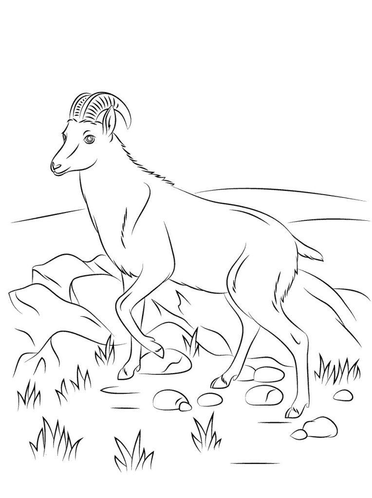 Coloriage chèvre