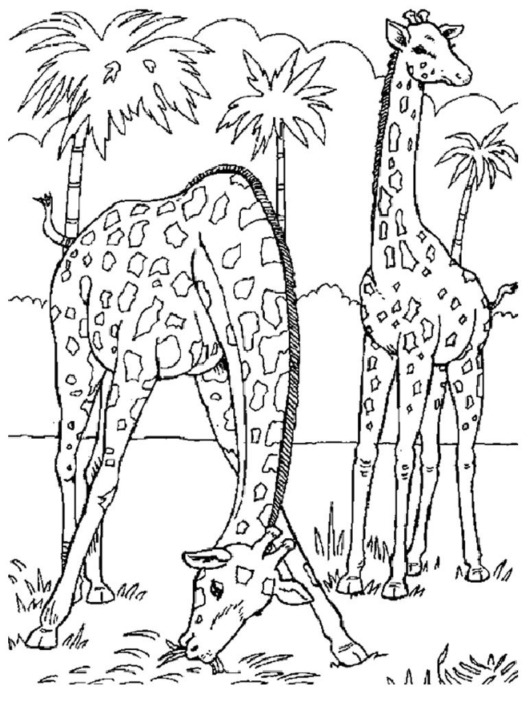 Coloriage animaux sauvages girafe