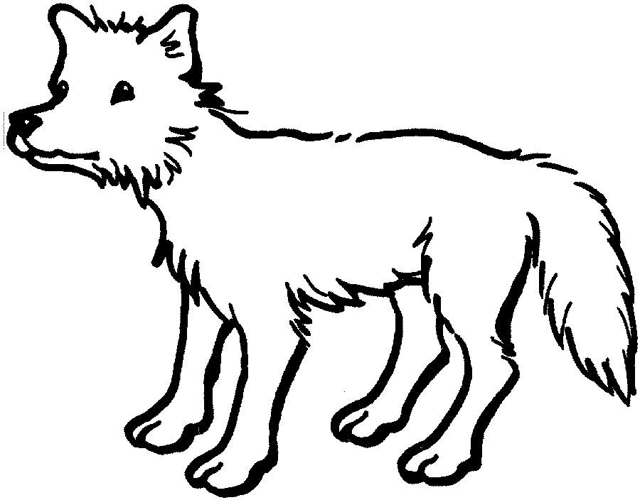Coloriage bébé animal coyote