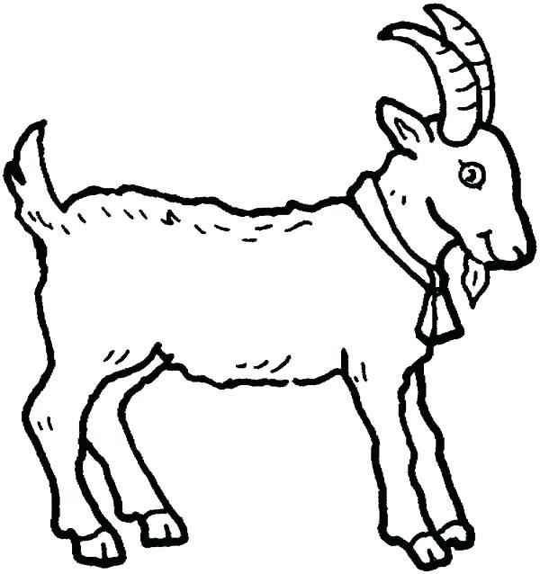 Coloriage bébé animal chèvre