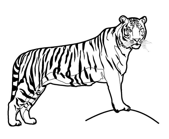 Tigre - Coloriages d'animaux