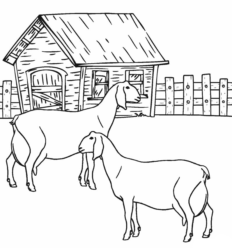 Coloriage animaux chèvres