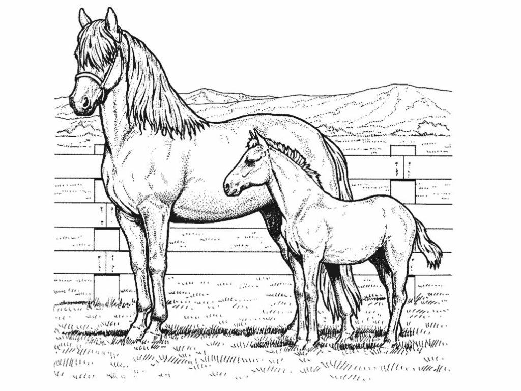 Coloriage poney et mère