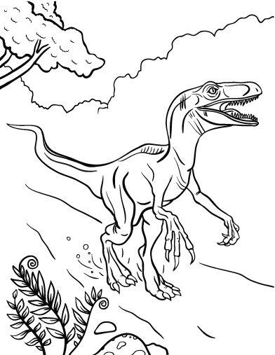 Coloriage vélociraptor à imprimer