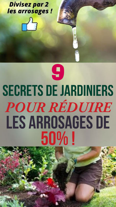9 Secrets de jardiniers pour réduire les arrosages de 50% !