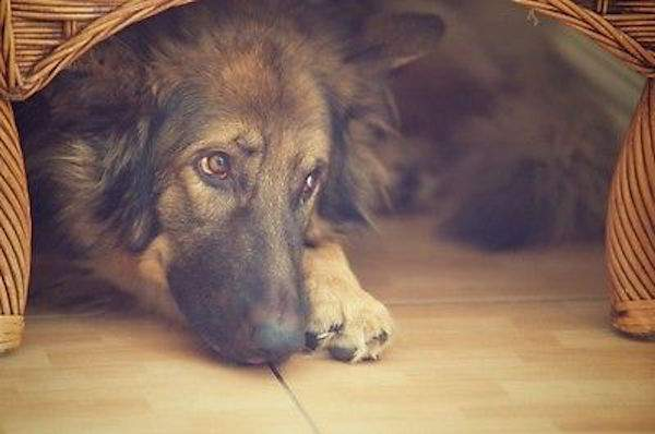 Astuces efficaces pour calmer instantanément votre chien