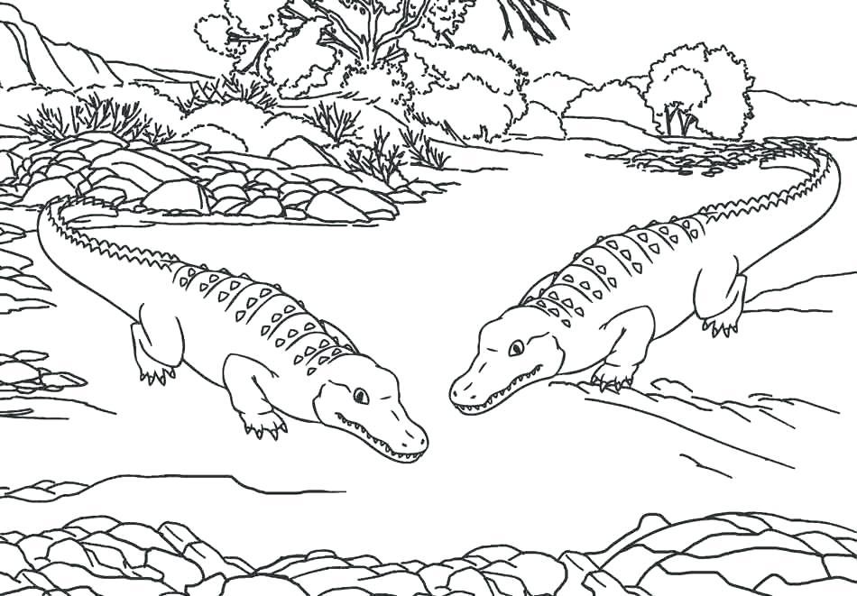 Alligators - Coloriage animaux du zoo
