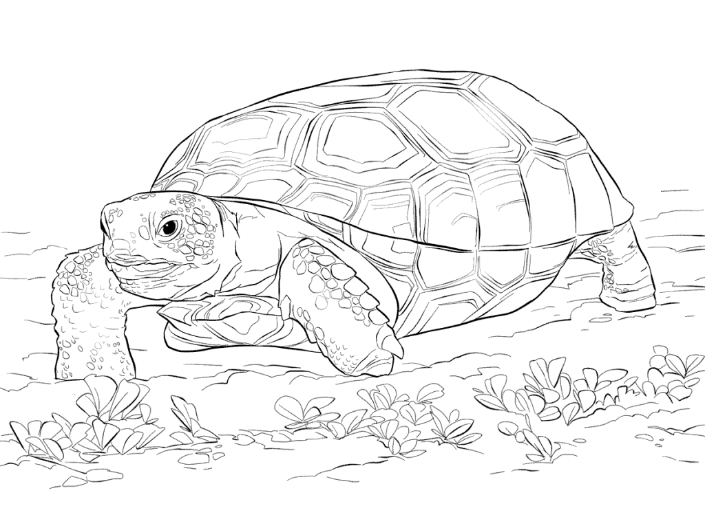 Tortise - Coloriage animaux du zoo